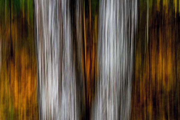Photograph - Twin Trunks by Darryl Dalton