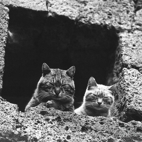 Faunal Photograph - Twins by Heiko Koehrer-Wagner