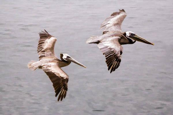 Digital Art - 00010 Twins In Flight by Photographic Art by Russel Ray Photos
