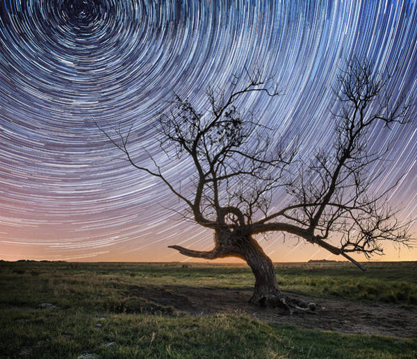 Star Trails Photograph - Twisted by Aaron J Groen