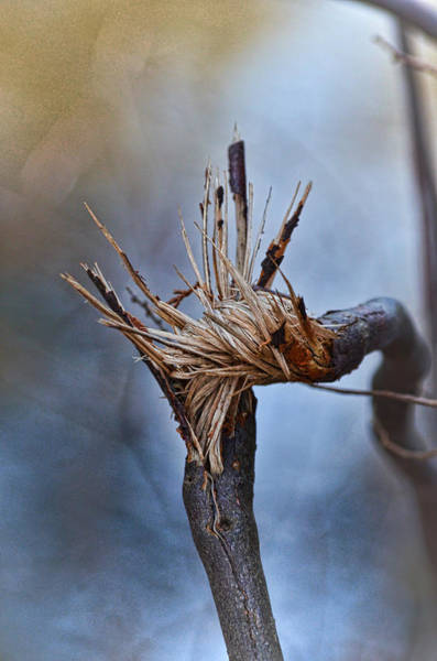 Photograph - Twisted And Splintered by Beth Sawickie