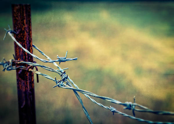 Wall Art - Photograph - Twisted by Caitlyn  Grasso