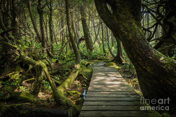 Photograph - Twisted Forest by Carrie Cole