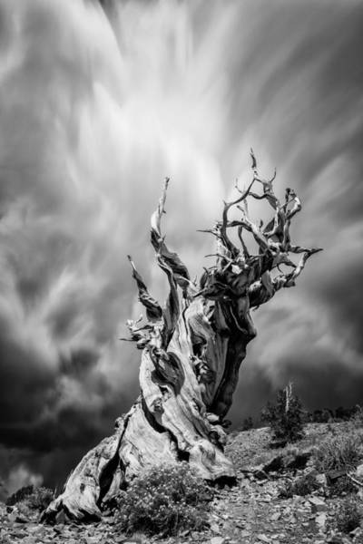 Photograph - Twisted In Time by Tassanee Angiolillo