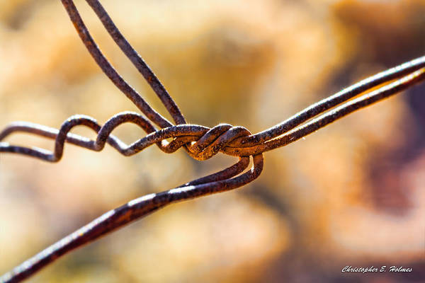 Photograph - Twisted Tension by Christopher Holmes