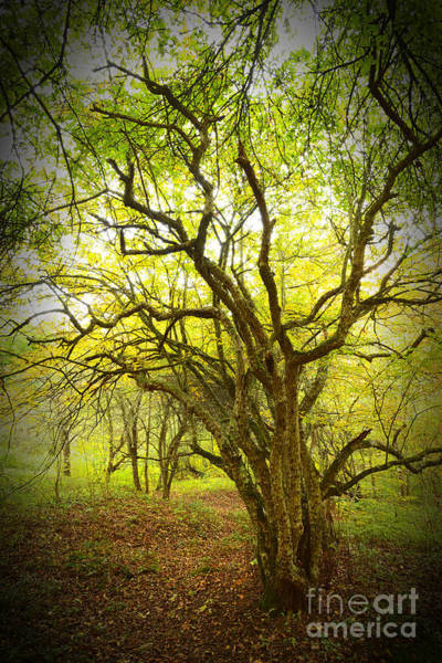 Photograph - Twisted Thorn Tree by Thomas R Fletcher