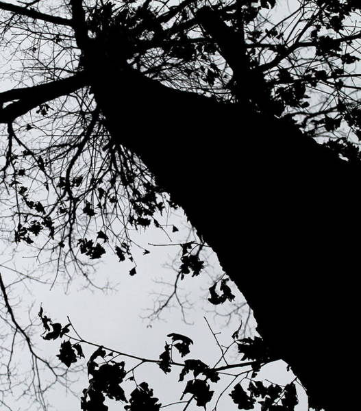 Photograph - Twisted Tree by Candice Trimble