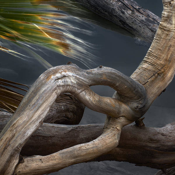 Photograph - Twisted Wood Abstract by Dave Dilli