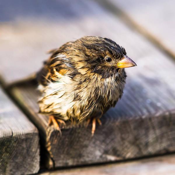 Chirping Photograph - Twitting Friend 7 - Faulty Meteo by Alexander Senin