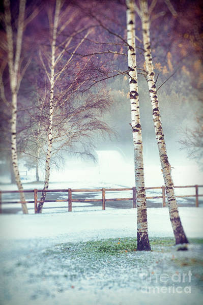 Photograph - Two Birches by Silvia Ganora