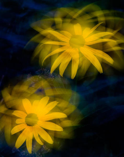 Photograph - Two Black-eyed Susans by Rob Huntley