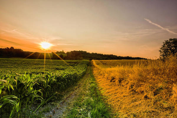 Contrasts Photograph - Two Contrasting Fields Of Crops At by Verity E. Milligan
