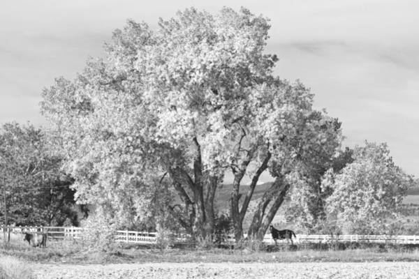 Photograph - Two Country Horses Autumn View In Black And White by James BO Insogna