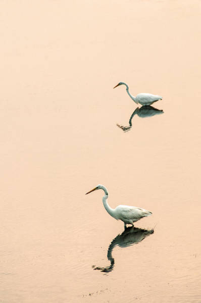 Photograph - Two Egrets by Don Johnson