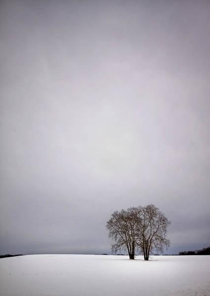 Countryside Wall Art - Photograph - Two by Evelina Kremsdorf
