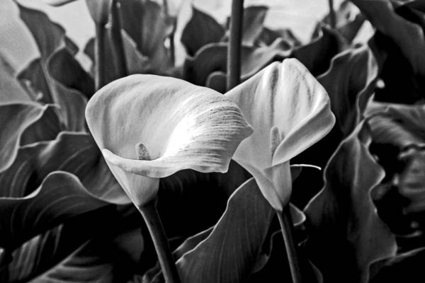 Photograph - Two Floral Gifts by Joseph Coulombe