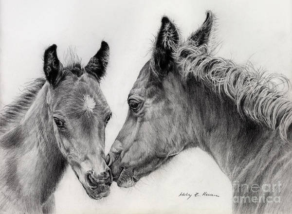 Wall Art - Drawing - Two Foals by Hailey E Herrera