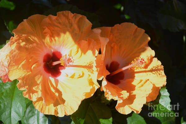 Luther Photograph - Two For The Show by Luther Fine Art
