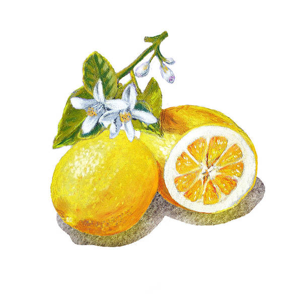 Fruit Wall Art - Painting - Two Happy Lemons by Irina Sztukowski