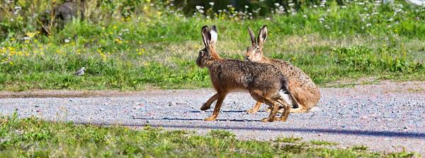 Wild Rabbit Photographs (Page #4 of 17) | Fine Art America