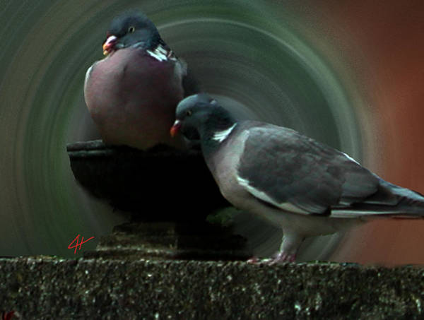 Photograph - Two Holy Pigeon Friends by Colette V Hera  Guggenheim