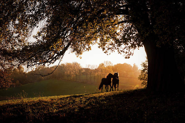 Baden Wuerttemberg Photograph - Two Horses At Sunset, Baden by Animal Images