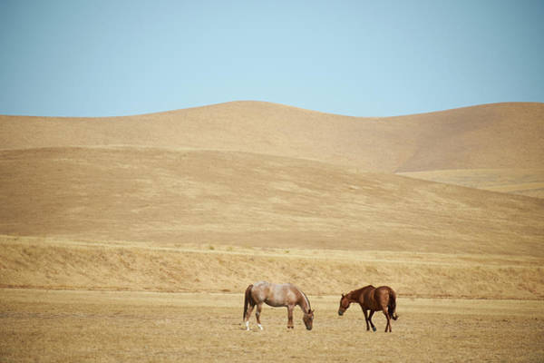 Grazing Photograph - Two Horses Grazing by Steve Lewis Stock