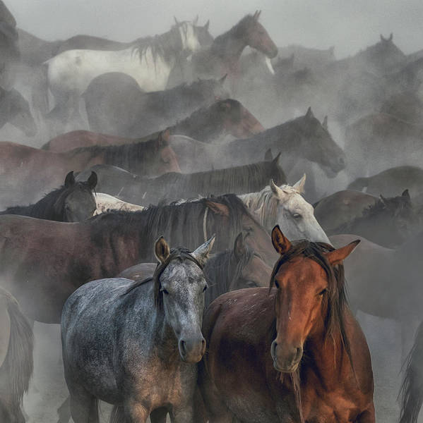 Herd Photograph - Two Horses by H??seyin Ta??k??n