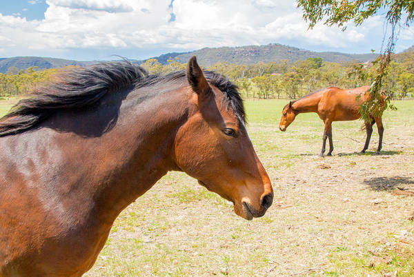 Photograph - Two Horses by Nicholas Blackwell