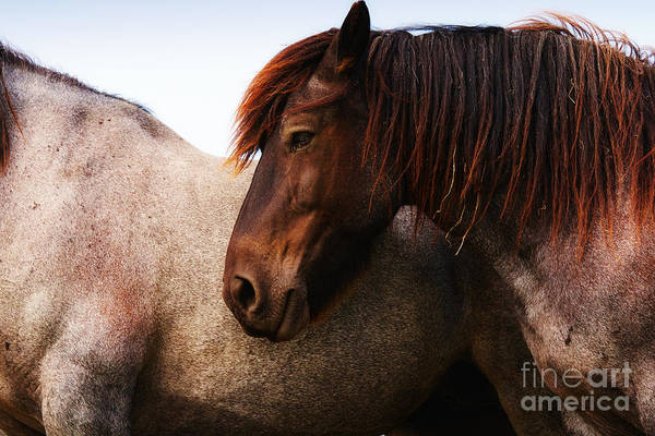 Photograph - Two Horses by Nick  Biemans