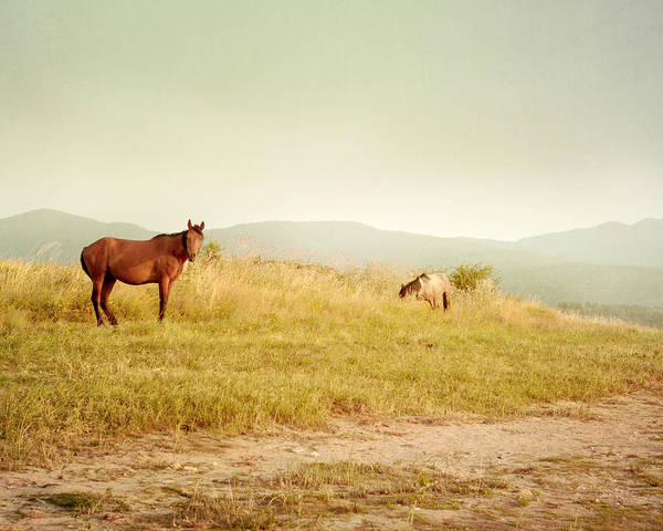 Wall Art - Photograph - Two Horses by Violet Gray