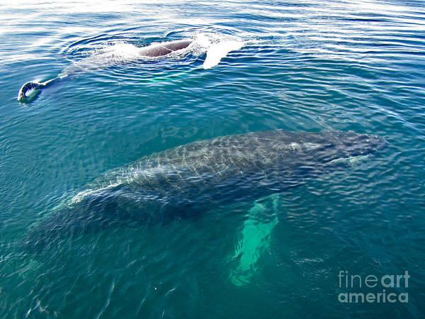 Photograph - Two Humpbacks  by Bette Phelan