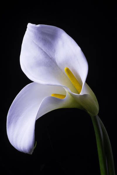 Calla Lilies Photograph - Two In Love by Garry Gay
