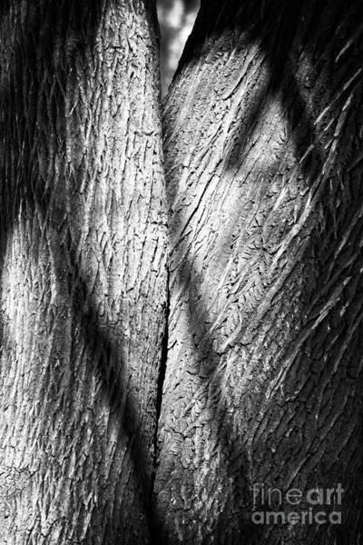 Photograph - Two by John Rizzuto