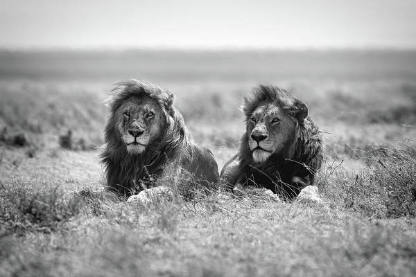 Wild Grass Photograph - Two Kings by Nicol?s Merino