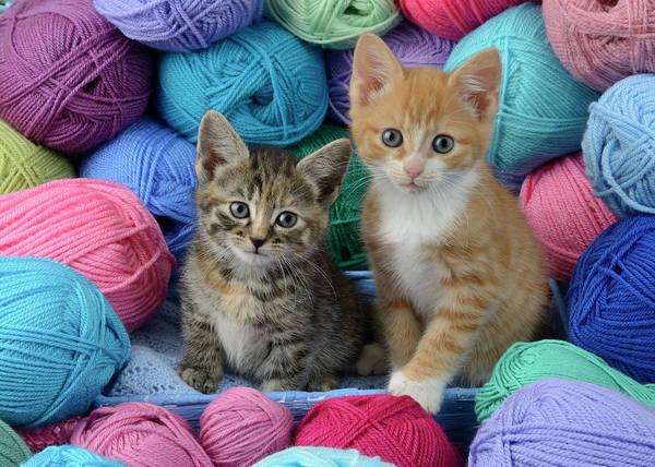 Wall Art - Painting - Two Kittens With Wool by MGL Meiklejohn Graphics Licensing