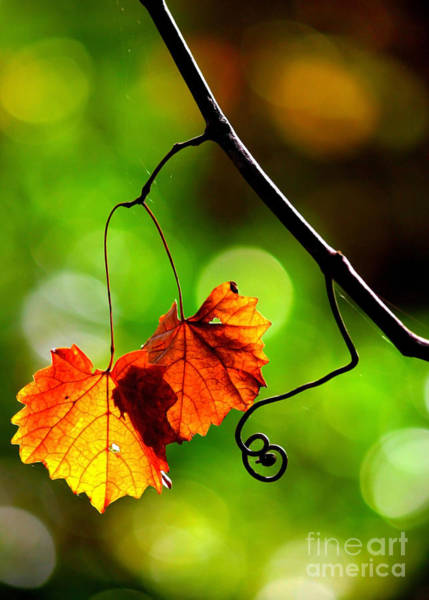 Photograph - Two Leaves And A Curlicue by Carol Groenen