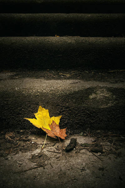Wall Art - Photograph - Two Leaves On A Staircase by Scott Norris