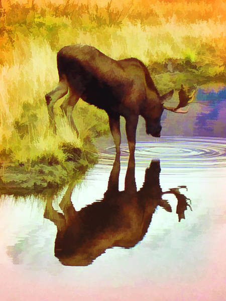 Two Moose  Art Print