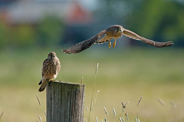 Photograph - Two Of A Kind Leaving One Behind by Torbjorn Swenelius