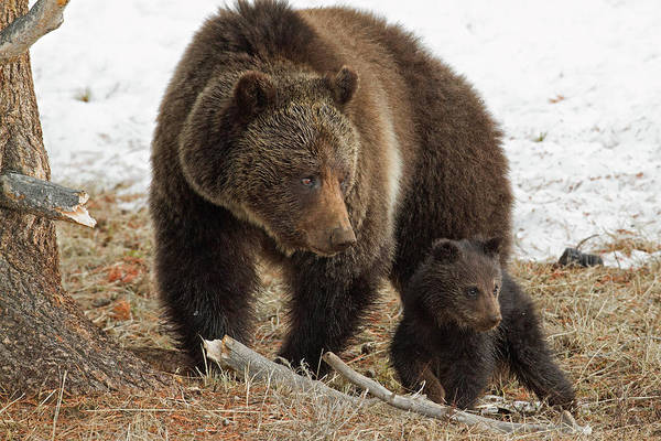 Grizzly Bears Photograph - Two Of A Kind by Sandy Sisti