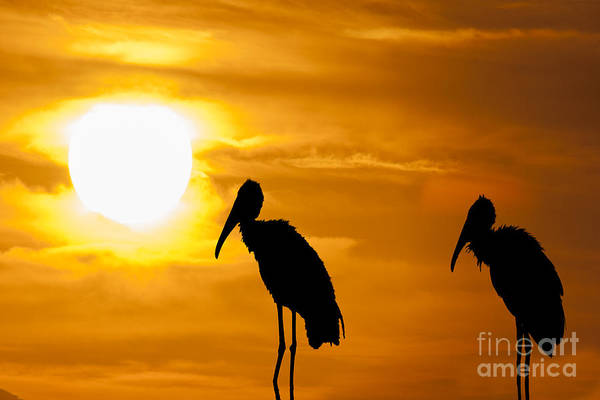 Photograph - Two Old Birds At End Of Day by Dan Friend