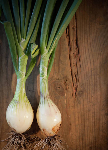 Scallion Photograph - Two Onions by Peter Chadwick Lrps