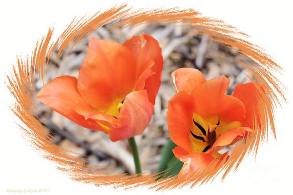 Photograph - Two Orange Lilies by Gena Weiser