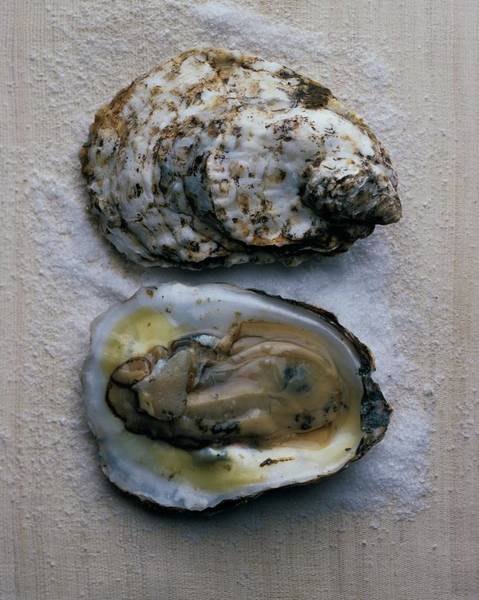 Fish Photograph - Two Oysters by Romulo Yanes