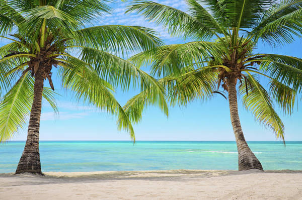 Cana Island Wall Art - Photograph - Two Palm Trees On An Exotic Beach In by Gerisima
