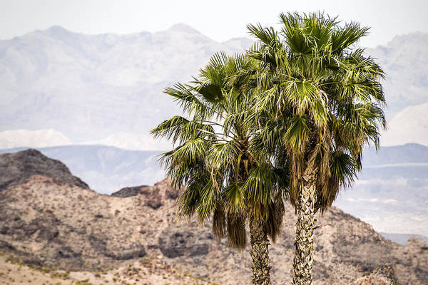 Photograph - Two Palm Trees by  Onyonet  Photo Studios