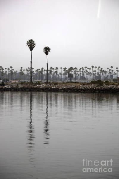 Wall Art - Photograph - Two Palms by Amanda Barcon
