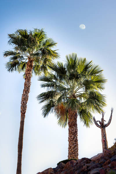 Photograph - Two Palms And A Skeleton by  Onyonet  Photo Studios