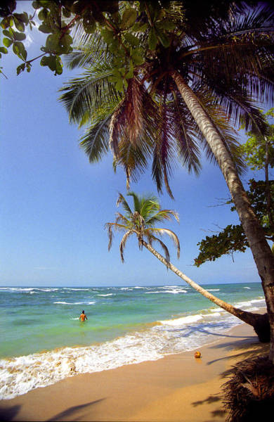 Cahuita Photograph - Two Palms And The Emerald Sea by Michael Maltese